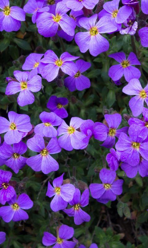 Flowers Purple Summer Garden Beautiful Hd Wallpapers     X