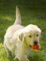 Pretty Puppys Cute Beautiful Lovely Dogs Animal Animals             X