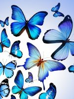 Butterfly Colorful Blue Drawing Art Beautiful Iphone   Wallpaper Ilikewallpaper Com