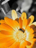 Beautiful Sunflower Wallpaper For Samsung Galaxy S