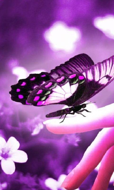 For Monarch  Beautiful Like         X