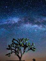 Beautiful Natural Tree