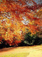 Autumn Scenery Edinburgh Botanic Garden