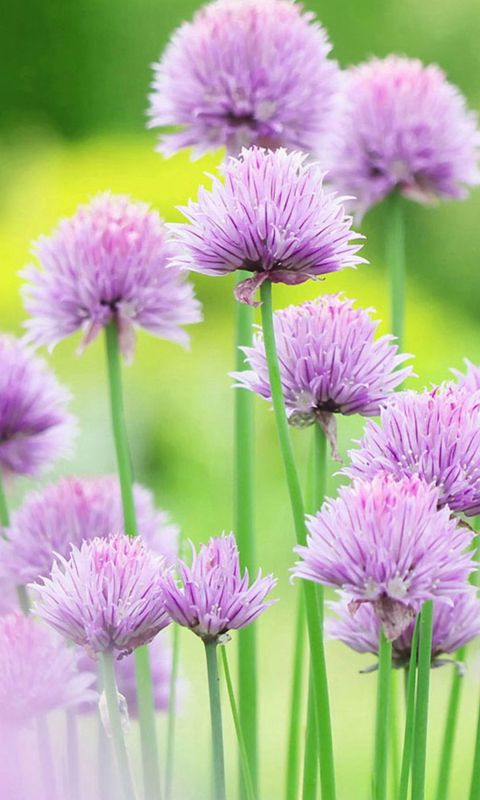 Fresh And Elegant Flower