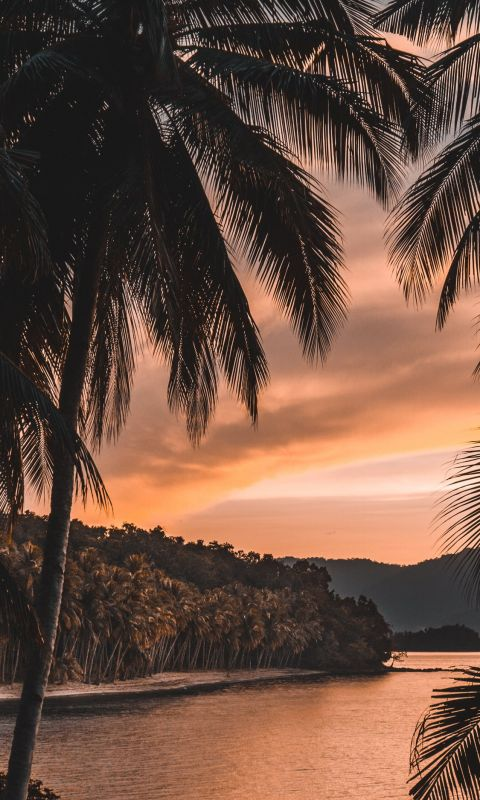 silhouette of palm tree during golden hour wallpaper