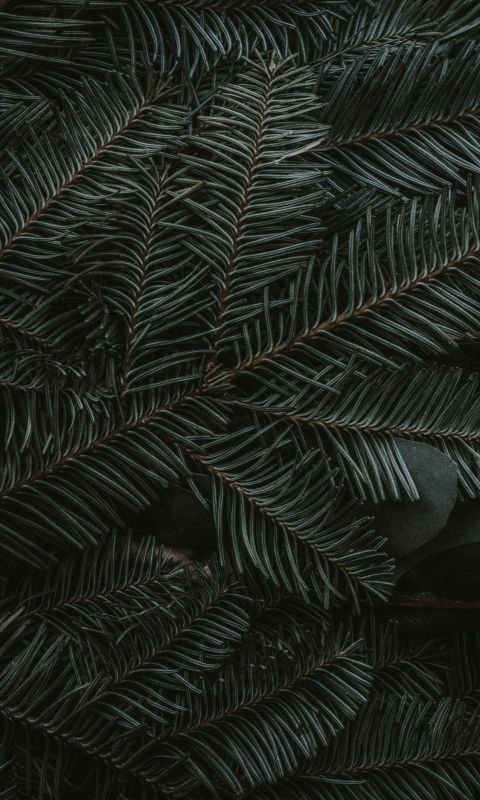 green pine tree leaves wallpaper