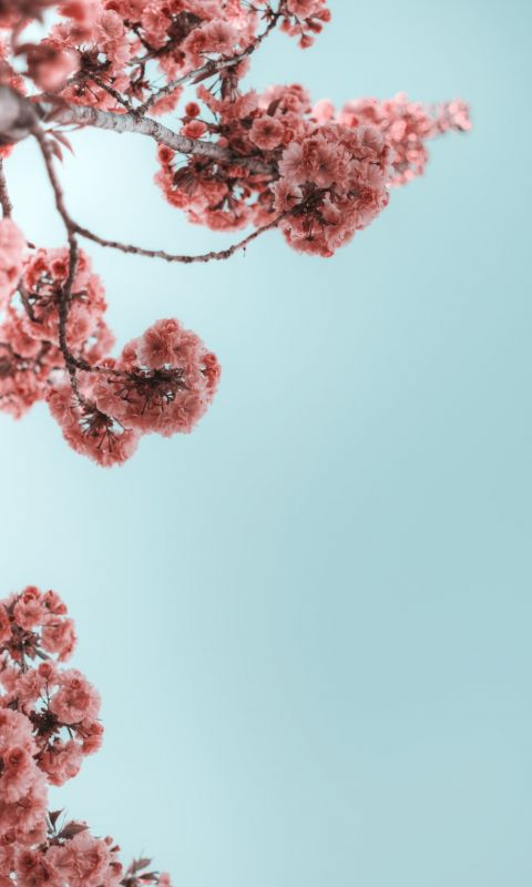 selective photograph of branches with flower wallpaper