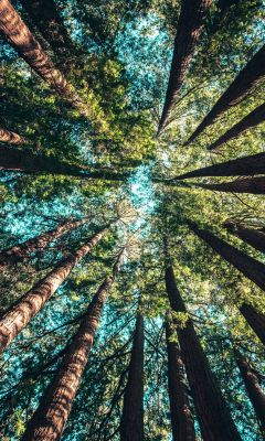 low angle photography of trees at daytime wallpaper