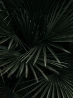 grayscale photography of leaves wallpaper