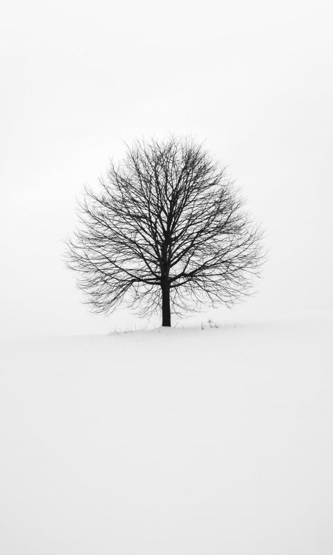 photography of tree wallpaper