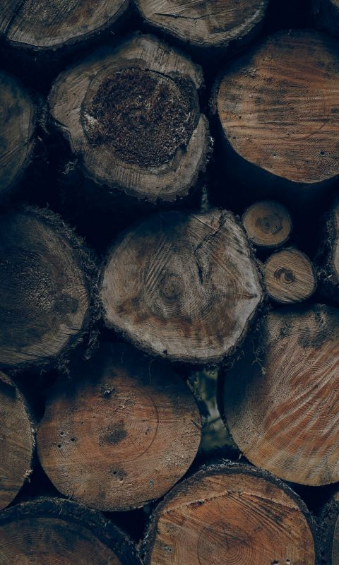 brown wood slice lot wallpaper
