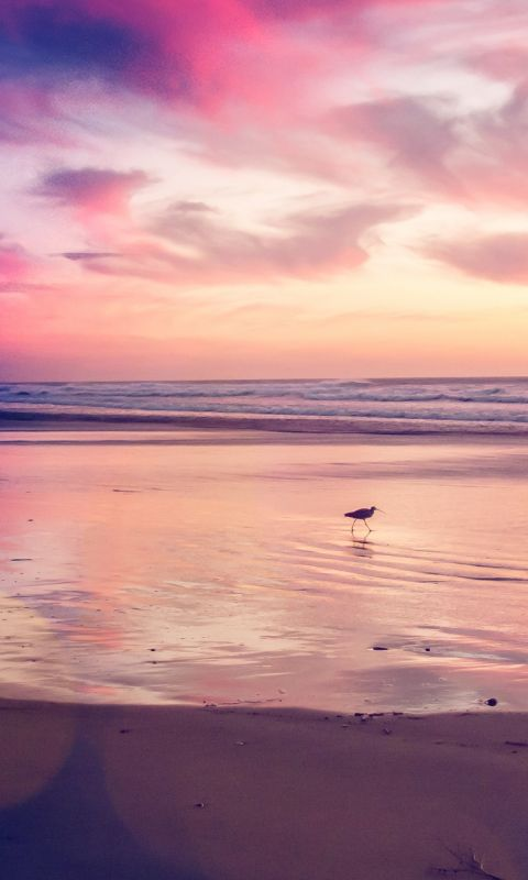 Sunset beach bird wallpaper