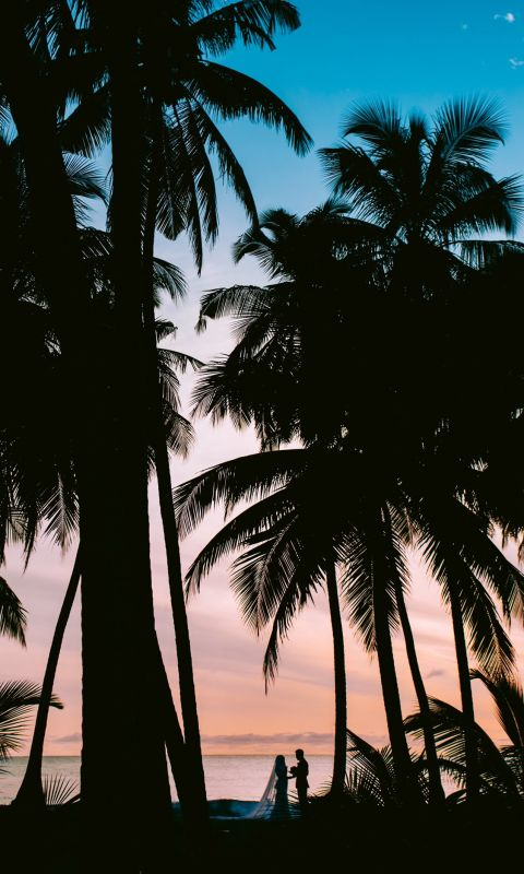 silhouette photography of coconut palm trees wallpaper
