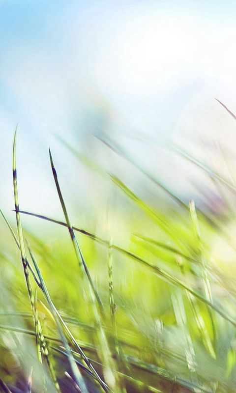 Nature Green Grass Bokeh Summer Flare wallpaper