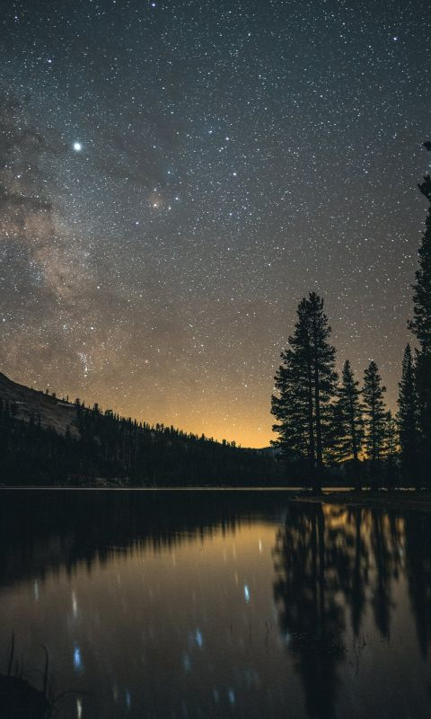 tall trees near body of water at nighttime wallpaper