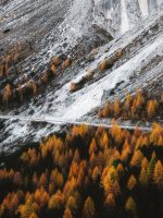 aerial view photography of forest wallpaper