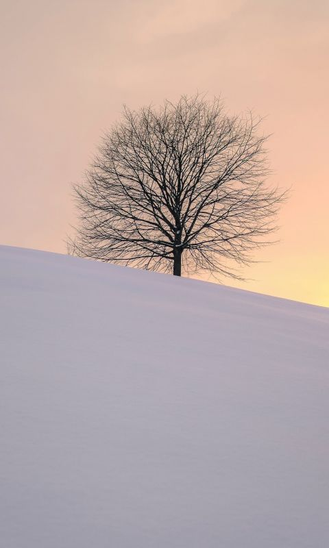 leafless tree on the hill wallpaper