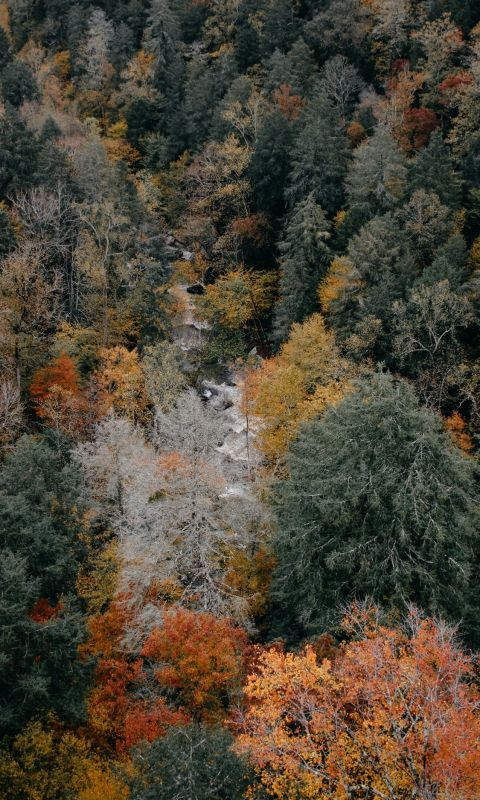 aerial photography of woods wallpaper