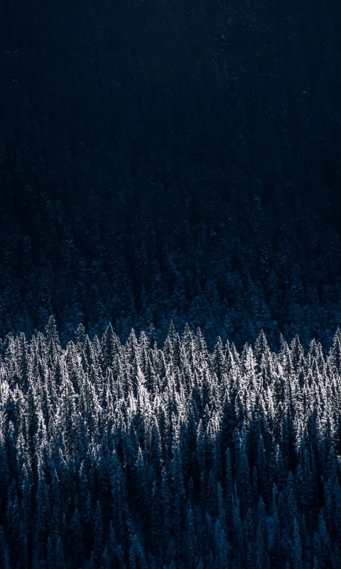 aerial photography of snow capped trees wallpaper