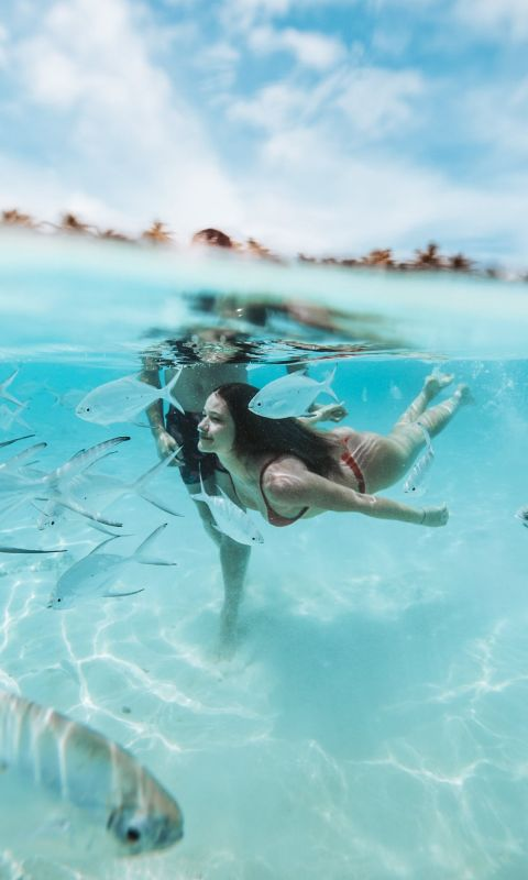 two people diving on clear body of water wallpaper