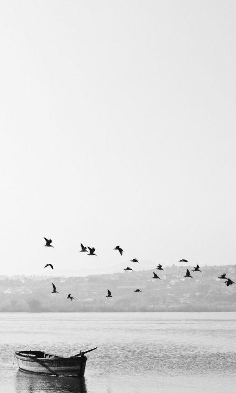 birds flying over boat wallpaper
