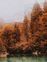 blue lake surrounded by brown leafed trees wallpaper