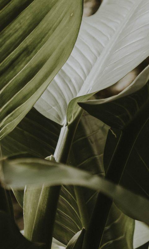 green leafy plant wallpaper
