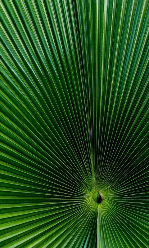 green fan palm leaf wallpaper