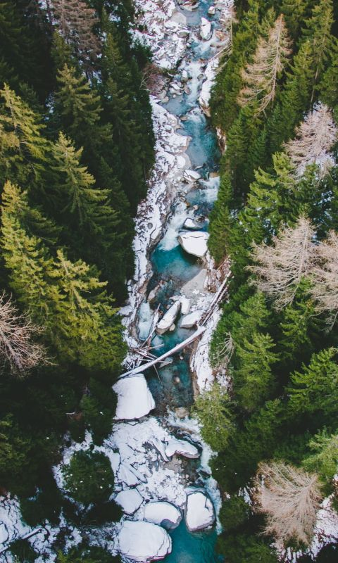 aerial photography of body of water between pine t... wallpaper