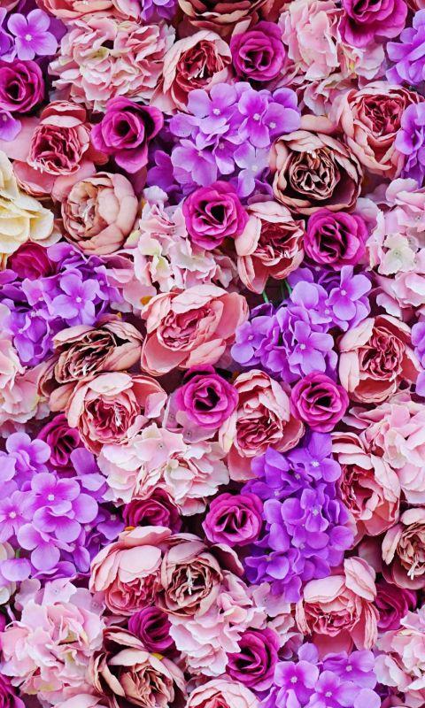 pink and purple petaled flower wallpaper