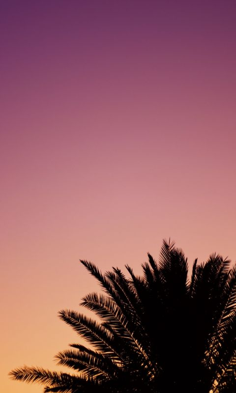 silhouette of palm tree wallpaper