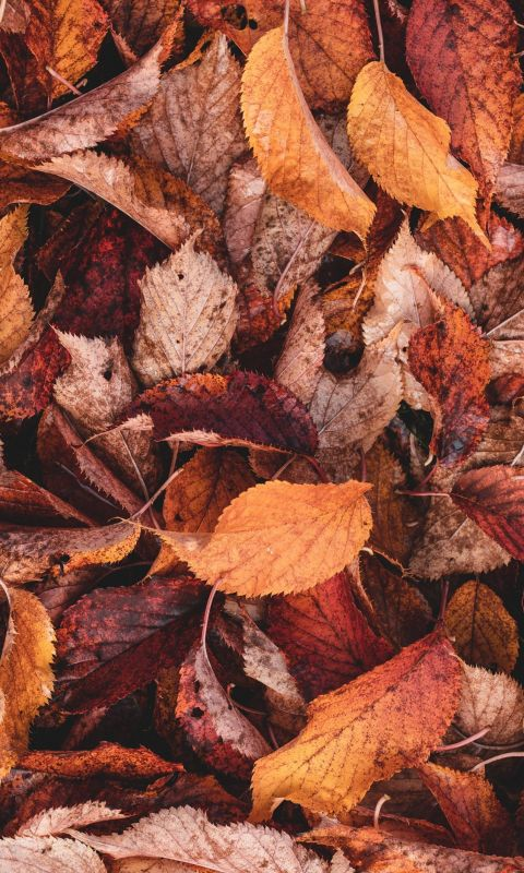 brown and yellow leaves wallpaper