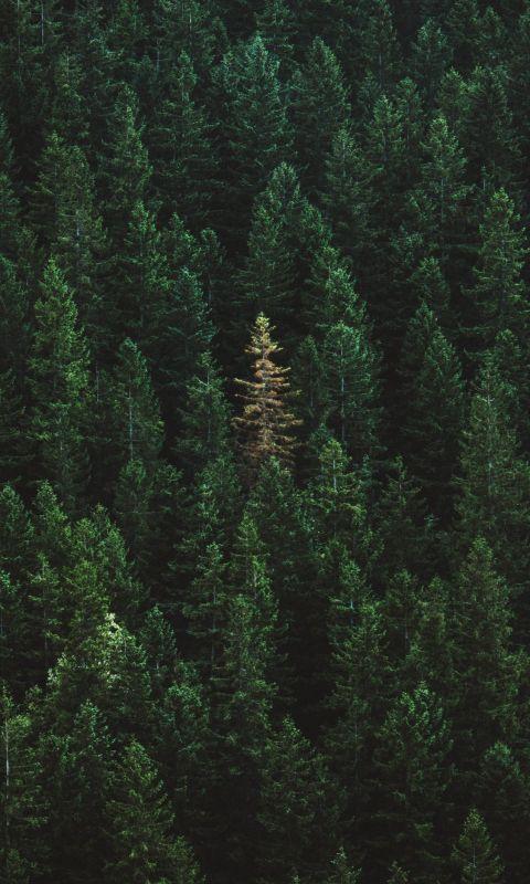 green treers wallpaper