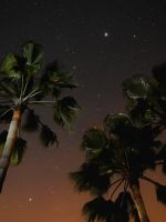 three coconut trees during nighttime wallpaper