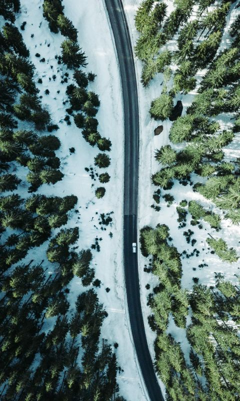 aerial photography vehicle on road surrounded by t... wallpaper