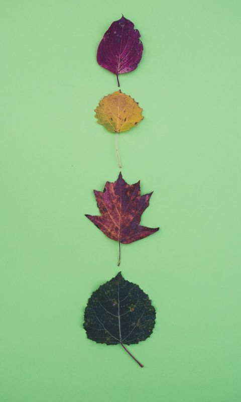 four leaves wallpaper