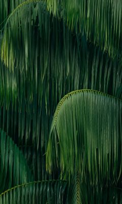 green coconut trees wallpaper