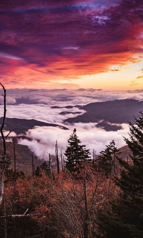 sea of clouds on mountain wallpaper