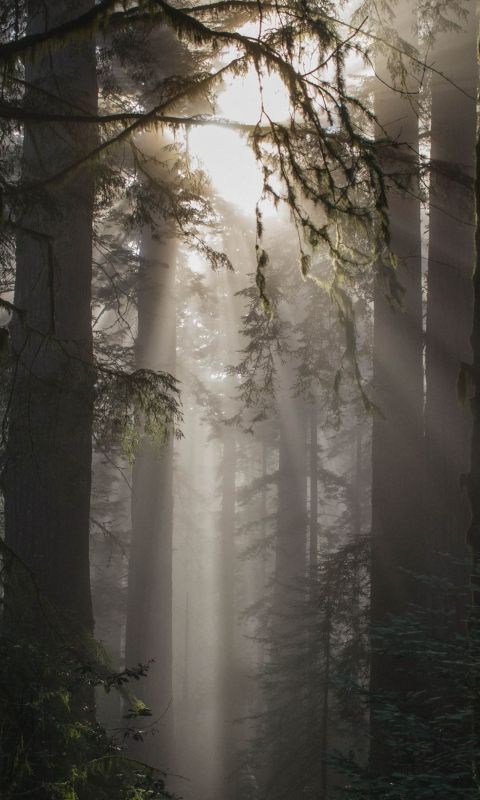 foggy weather with trees wallpaper