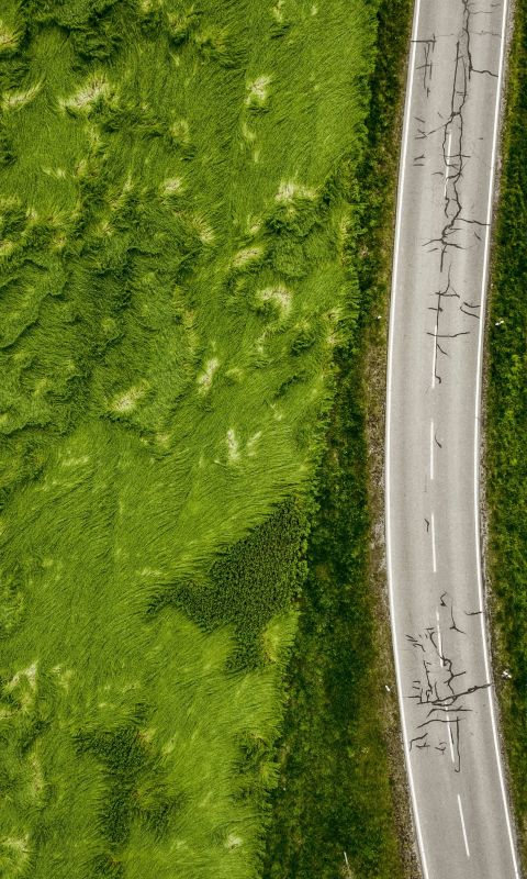 aerial photo of empty concrete road between plants wallpaper