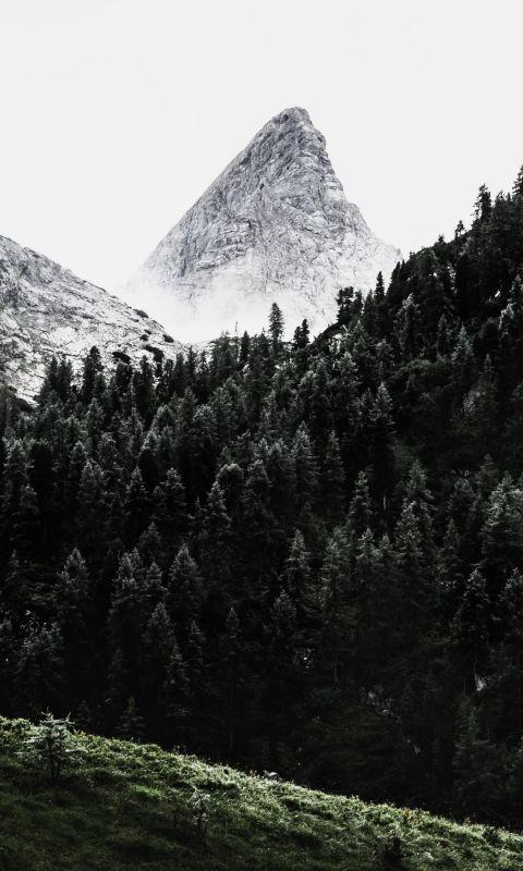 green pine trees across white mountain wallpaper