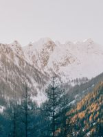 trees near mountain wallpaper