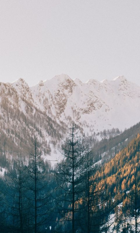 trees near mountain wallpaper