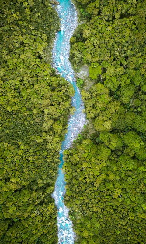 river between trees on daytime wallpaper