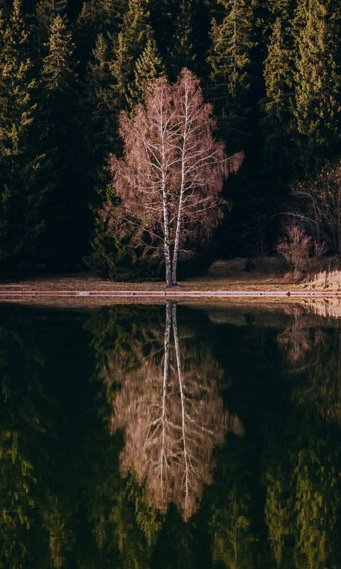 reflection of tree on the river wallpaper