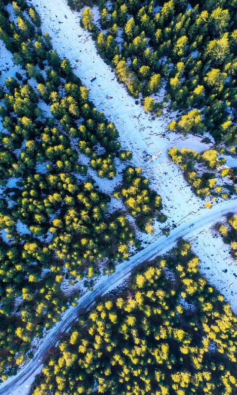 aerial photography of green trees surrounding road... wallpaper