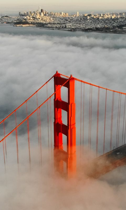aerial photography of foggy red bridge wallpaper