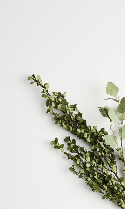 greeb leaf plants wallpaper