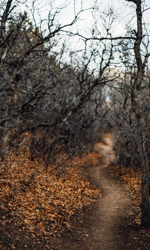 black leafless trees and pathway wallpaper