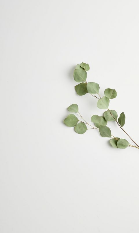 greeb leads wallpaper